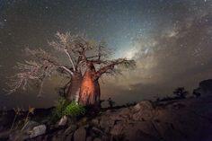 Photo of Baobab at night taken at Kubu Island, Makgadikgadi Pans, Botswana