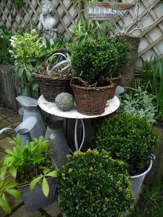 """Find and save images from the """"Outdoor"""" collection by chloe (wearealladventurers) on We Heart It, your everyday app to get lost in what you love. Balcony Garden, Garden Planters, Potted Garden, Small Gardens, Outdoor Gardens, Front Yard Decor, Terracota, Love Garden, Growing Plants"""