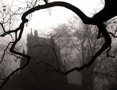 Cincinnati - Spring Grove Cemetery & Arboretum Dexter Mausoleum in a Tree Grip - Foggy Morning by David Paul Ohmer, via Flickr
