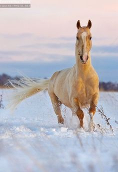 Nature Scenes With Horses