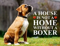 So true! #dogs #pets #Boxers Facebook.com/sodoggonefunny www.ALocket2Love.OrigamiOwl.com