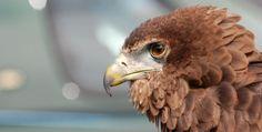 just like the eagle