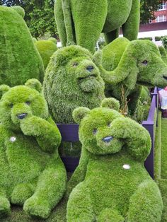 Chelsea Flower Show topiary bears ...need I say more?