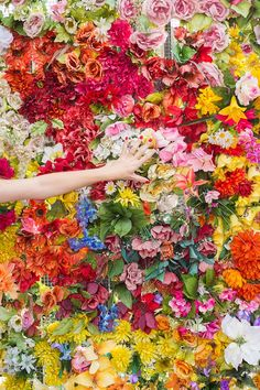 A Wall of Flowers
