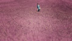 Magenta Land by Adrian Limani on 500px