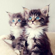 Kitty Cats (@theKitty_Cats) | Twitter
