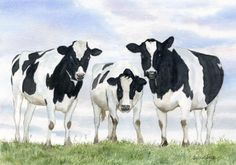 We're Watching You! A  watercolour by Sylvia Twiss