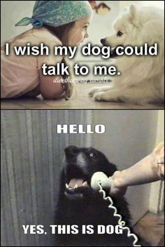 Dogs can talk // funny pictures - funny photos - funny images - funny pics - funny quotes - #lol #humor #funnypictures