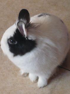 Bounty mon lapin