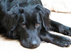 Pet therapy Insurance options