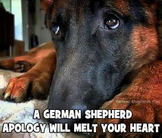 Check out my Facebook page dedicated to German Shepherds https://www.facebook.com/GermanShepherdDogFans