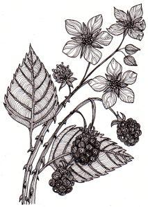 DeviantArt – Discover The Largest Online Art Gallery and Community – Octopus Tattoo Vine Tattoos, Sleeve Tattoos, Tatoos, Flower Tattoos, Blackberry Tattoo, Vine Drawing, Flower Sleeve, Geniale Tattoos, Botanical Tattoo