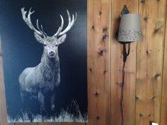Hjort Moose, Animals, Animales, Animaux, Mousse, Animal, Animais, Elk