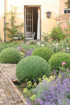 You could do something similar to these balls in Brisbane with Westringia varieties. The Cotswolds UK - Helen Correll