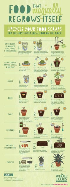 Be sure to upcycle your food scraps… All of this food will magically regrow itself!