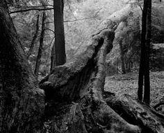 Sans titre, Ulverton, Qc 1986 Photo D Art, Dark Forest, Les Oeuvres, Photos, San, Trees, Plants, Painting, Photography