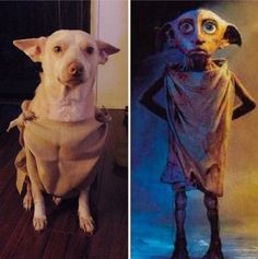 This dog that makes a fantastic Dobby. | 19 Dog Halloween Costumes That Are Actually Borderline Genius