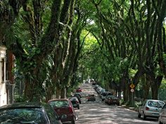 An urban street blanketed with trees. The Rua Goncalo de Carvalho in Porto Alegre, Brazil