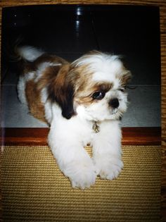 Sonny as a puppy.. vamping it up