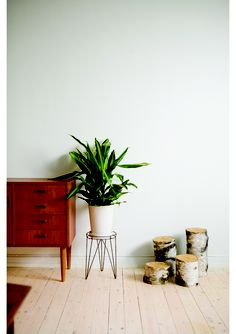 houseplants and tree trunks (which would look really nice painted either white or light gray)