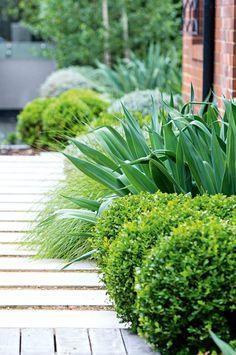 garden-plantings-feb-17-20170203112449~q75,dx1920y-u1r1g0,c--.jpg (1920×2889)