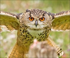 Look into my Eyes! | Flickr - Photo Sharing!