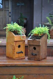 Green Roof Bird House
