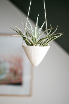 Floating airplant