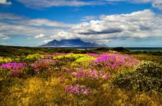 Table mountain from the West Coast by Nauta Piscatorque on YouPic Table Mountain, West Coast, Mountains, Landscape, Nature, Travel, Naturaleza, Viajes, Scenery