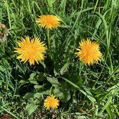 #Blumen #Flowers #Natur #Nature #Schweiz #Switzerland
