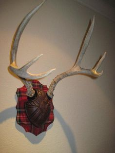 Whitetail Deer Antler Plaque Taxidermy Mount in 2019 ...