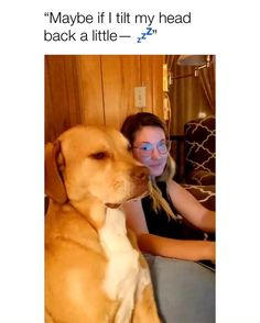 Cute Funny Dogs, Funny Dog Memes, Funny Dog Videos, Cute Funny Animals, Cute Animal Photos, Cute Animal Videos, Pet Puppy, Pet Dogs, Doggies