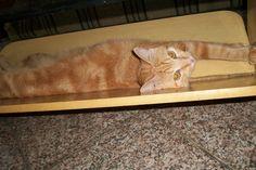Pimpinha Maria dormindo - 1 ano e 11 meses