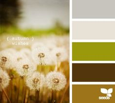 Color inspiration boards from Design Seeds