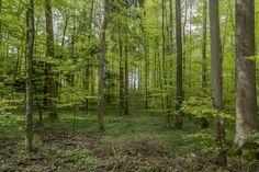 Frühlingswanderung zur Kartause Ittingen - Reisetipp