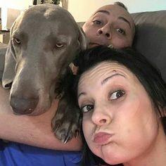 Ritratto di famiglia  Foto di: @neverjoys  #BauSocial  Anche oggi questi #umani #vitadacani #relax #home #friends #weim #weimaraner #divano #grace #cane #dog #italia #milano #instadog #love #doglovers #cani #dogs
