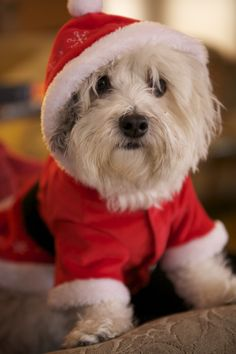 my dog, Roscoe...I love him sooooo much:)