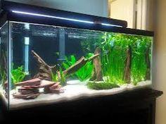 1000 images about zen aquarium on pinterest aquarium for Black fish tank gravel
