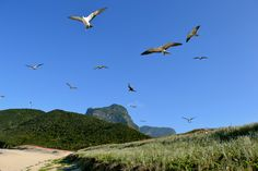 Blinky Beach is a popular spot on Lord Howe Island for bird lovers at any time of the year.