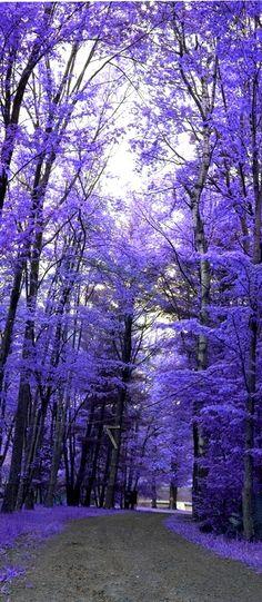 Purple forest color splash long pin