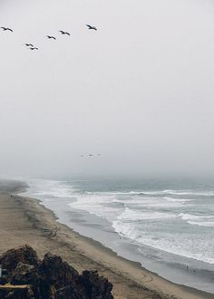 Fading coastal horizons, majestic creatures appearing out of the fog without a care in the world, some places feel like a dream.