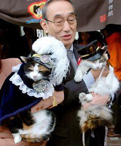 The stationmaster cats in Wakayama, Japan 和歌山県の駅長猫