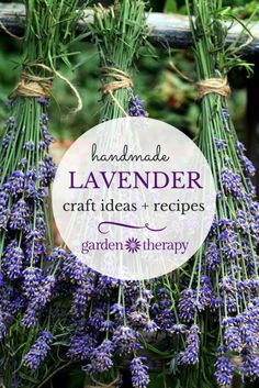 Here is a list of easy crafts and recipes that you can make with lavender. Freshening up your home, soaking in the tub and enjoying a sweet treat has never been more beautiful. #Lavender #ad
