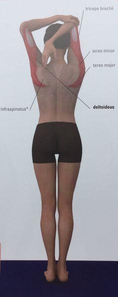 16 Best Pilates Anatomy Images On Pinterest Anatomy Anatomy