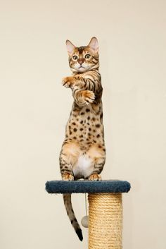 awesome These photo can prove that cat want to be a human by  standing with 2 legs