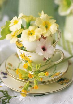 Primroses in delicate china tea cup - lovely for Spring/Easter. Yellow and Greens Vintage Wedding