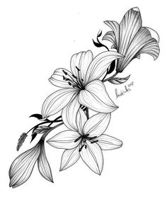 Lilly Flower Drawing, Lilly Flower Tattoo, Lilies Drawing, Easy Flower Drawings, Lillies Tattoo, Flower Tattoo Drawings, Flower Sketches, Flower Tattoo Designs, Flower Tattoos