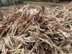sugarcane bagasse for making fuel pellets