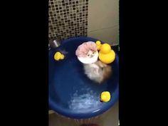 Pentru toate pisicuțele – Video – Gluma Zilei