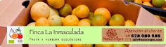 Conoce la Finca la Inmaculada, nuestro productor de confianza de Frutas y verduras ecológicas, con 12 años de experiencia en el cultivo de cítrico ecológico; naranjas, mandarinas y limones!!  Pruebas sus naranjas recién recolectadas!!